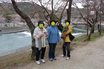 Kinenn_at_sakura